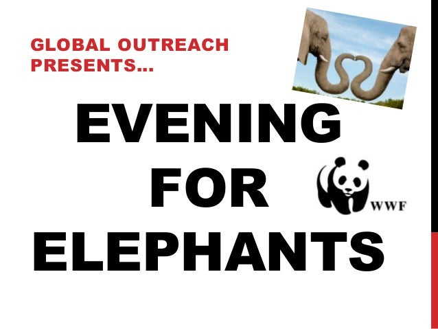 Evening for elephants
