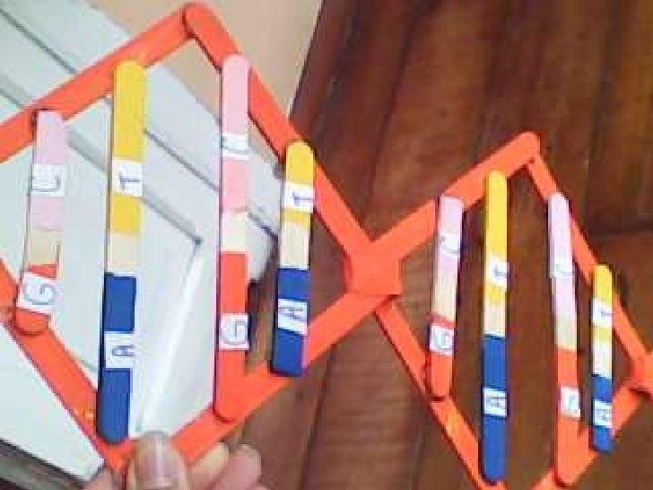 estructura de adn maqueta apexwallpapers