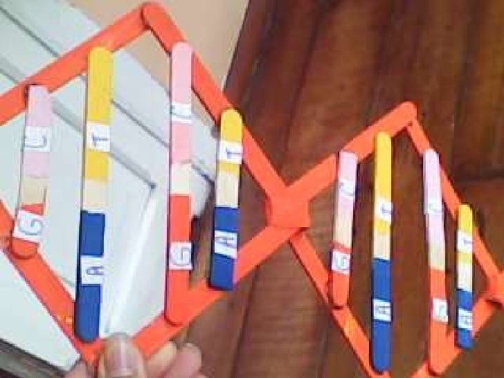 Estructura Del ADN Maqueta