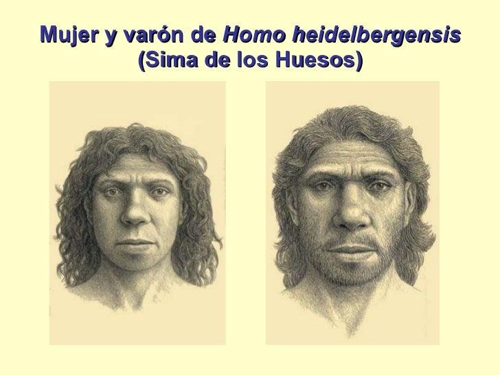 homo sapiens neanderthalensis essay