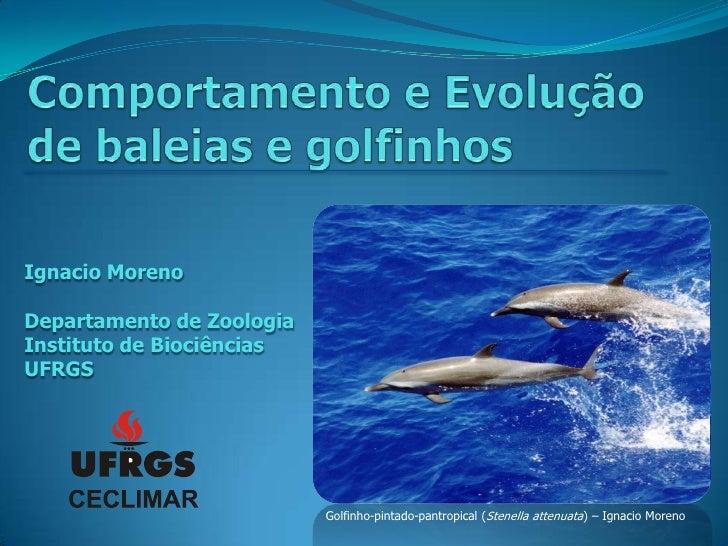 Ignacio MorenoDepartamento de ZoologiaInstituto de BiociênciasUFRGS                           Golfinho-pintado-pantropical...