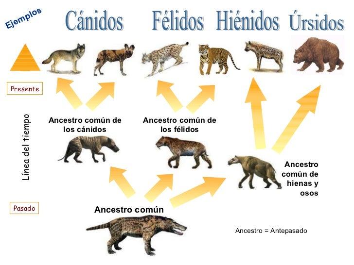 Caballeros del zodiaco libra latino dating 1