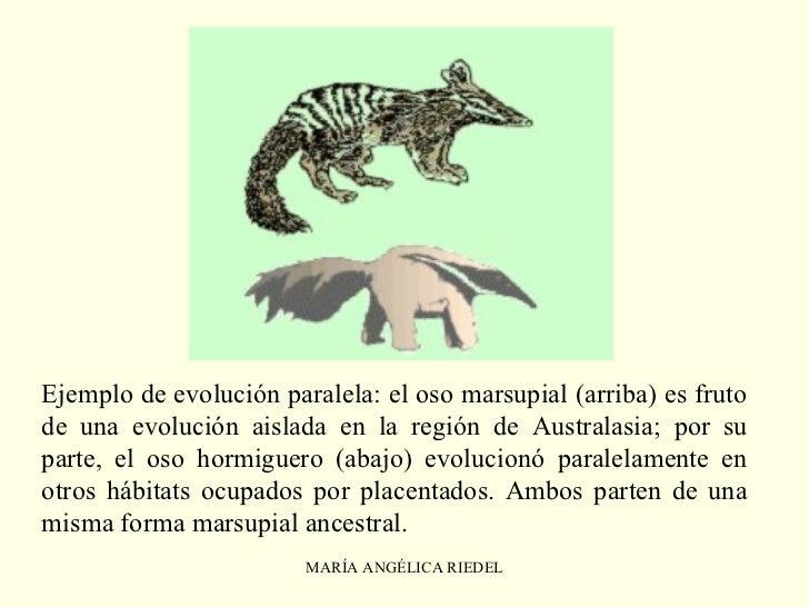 O Que Marsupial Evolución