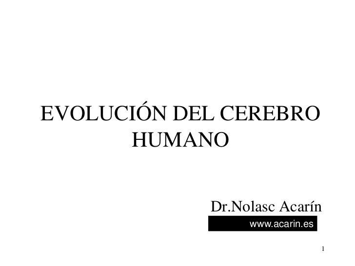 EVOLUCIÓN DEL CEREBRO       HUMANO              Dr.Nolasc Acarín                  www.acarin.es                           ...