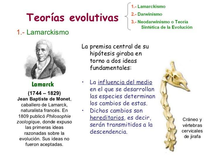 Teorías evolutivas 1.-   Lamarckismo (1744 – 1829) Jean Baptiste de Monet , caballero de Lamarck, naturalista francés. En ...