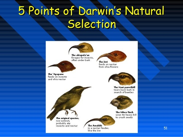 How Do Sexual Selection And Natural Selection Differ
