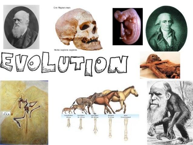 5.03 Evolution