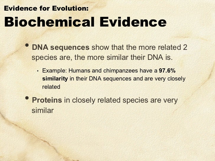 biochemical evidence of an evolutionary relationship between dinosaurs