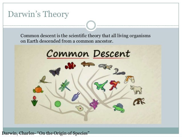 What Was Darwin S Theory Of Natural Selection