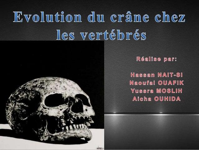 Introduction Définition Le Neurocrâne Le Splanchnocrâne Conclusion