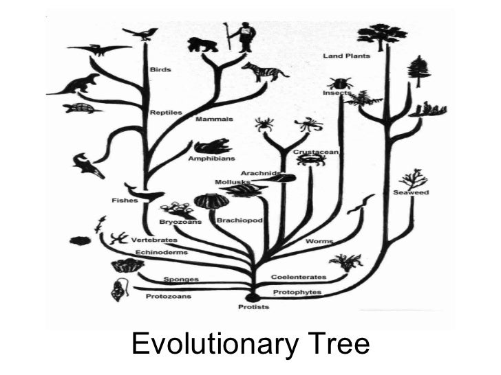 Evolution powerpoint