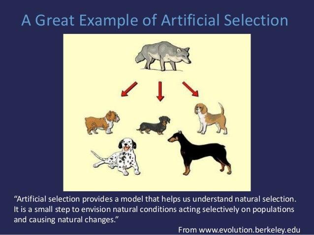 A Presentation On Evolution Ties