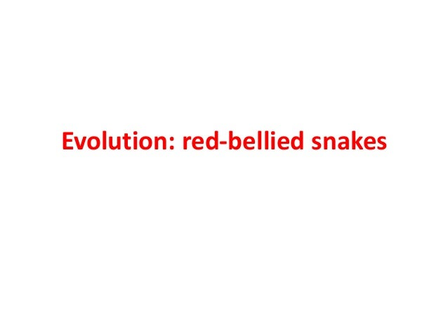 Evolution red bellied snakes
