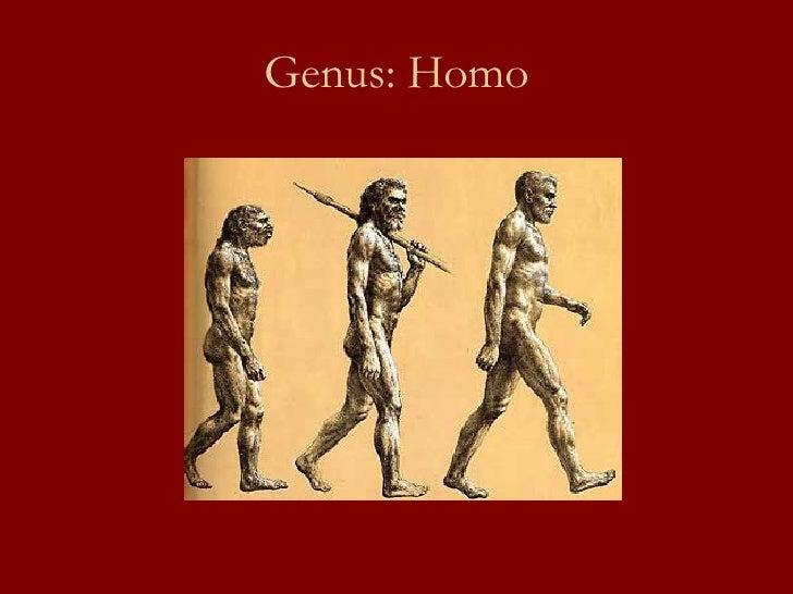 Genus: Homo