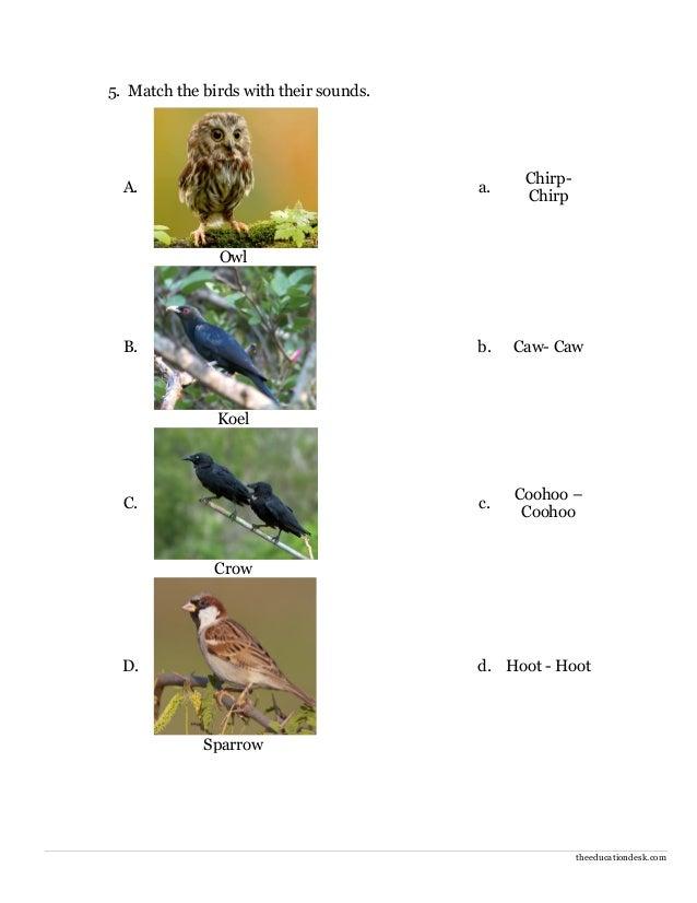 environmental science evs birds worksheet class ii. Black Bedroom Furniture Sets. Home Design Ideas