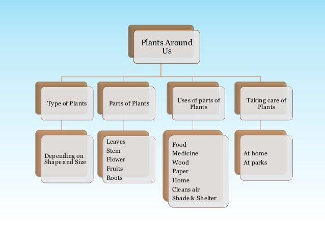 Environmental Science Evs Plants Around Us Class Iii on Evs Plants Worksheet