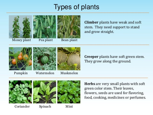 Environmental science evs plants around us class iii for Different kinds of plants