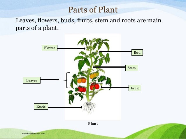 Parts Of Plants Worksheets For Grade 1 Plant parts of plant leaves