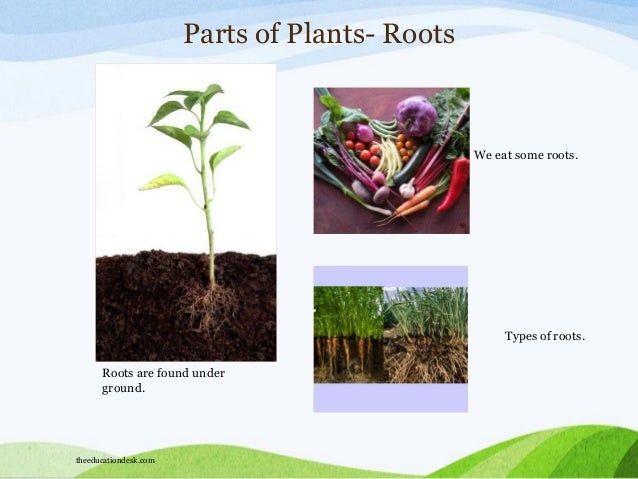 we Eat Trees we Eat Some Roots