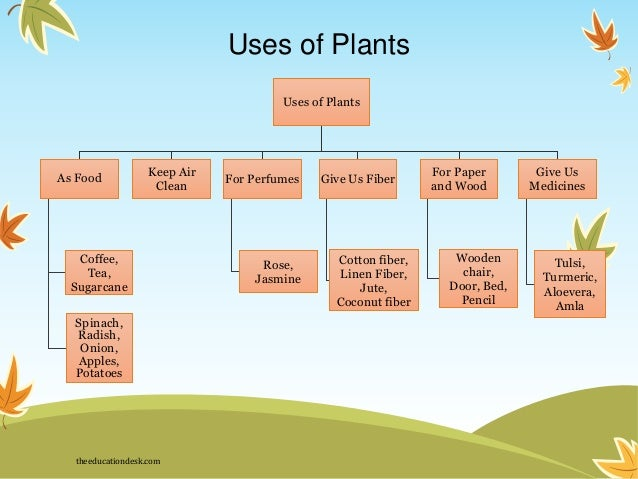 WHAT PLANTS GIVE US