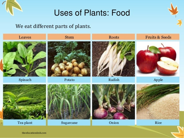 Parts of Plants we Eat we Eat Different Parts of