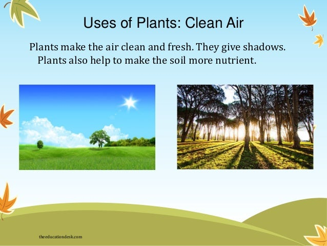 Image Result For Different Types Of Plants And Their Uses