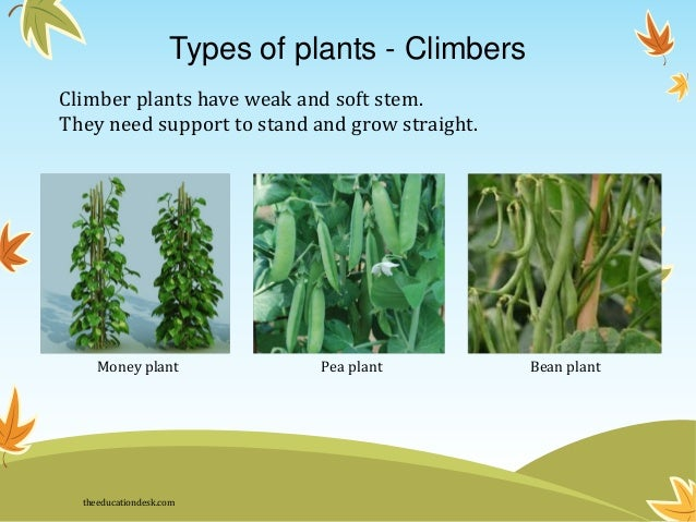 Pics for different types of plants and their names for Different kinds of plants