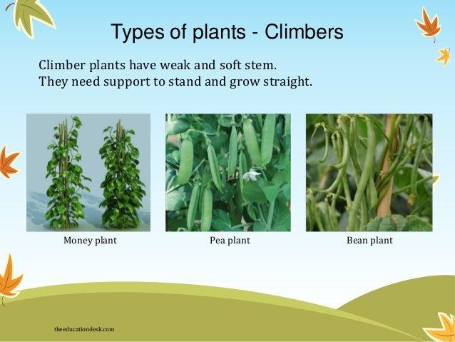 Environmental Science Evs Plants Class Ii