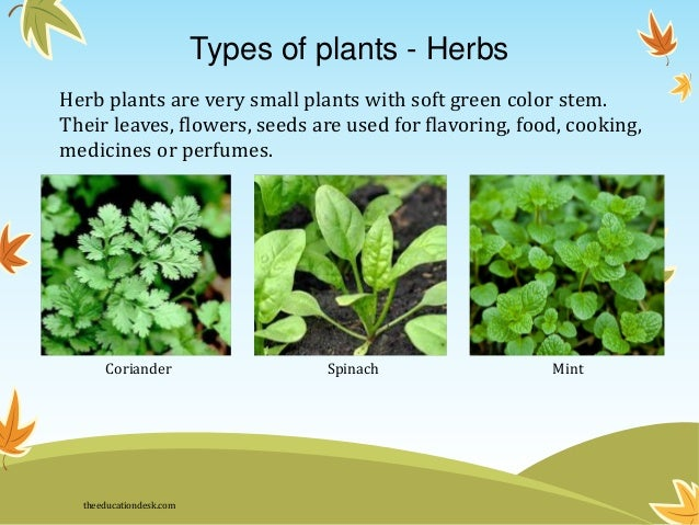 Environmental science evs plants class ii for Different kinds of plants