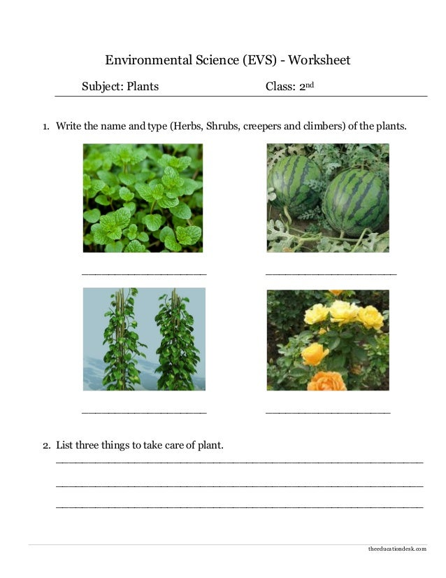 Environmental Science (EVS) : Plants Worksheet (Class II)