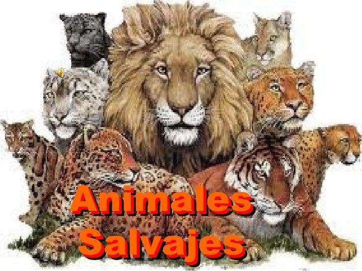 AnimalesAnimalesSalvajesSalvajes