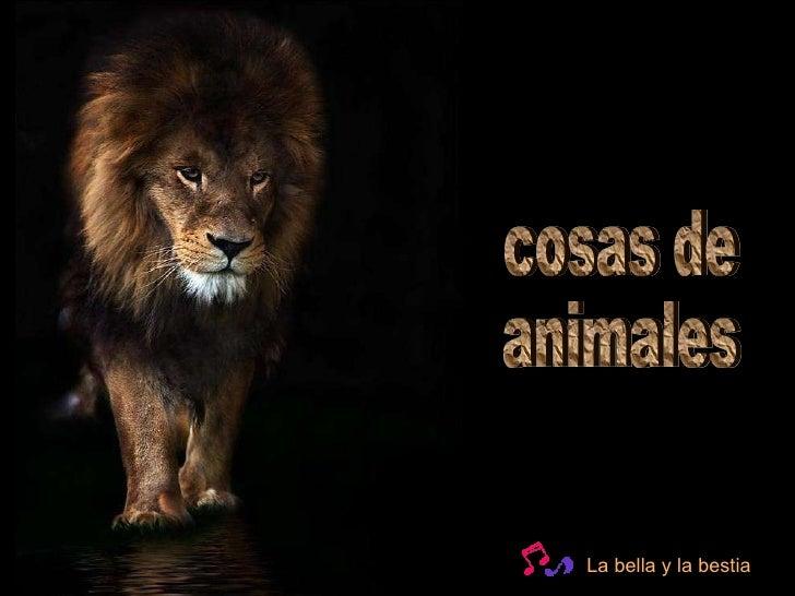 cosas de  animales La bella y la bestia