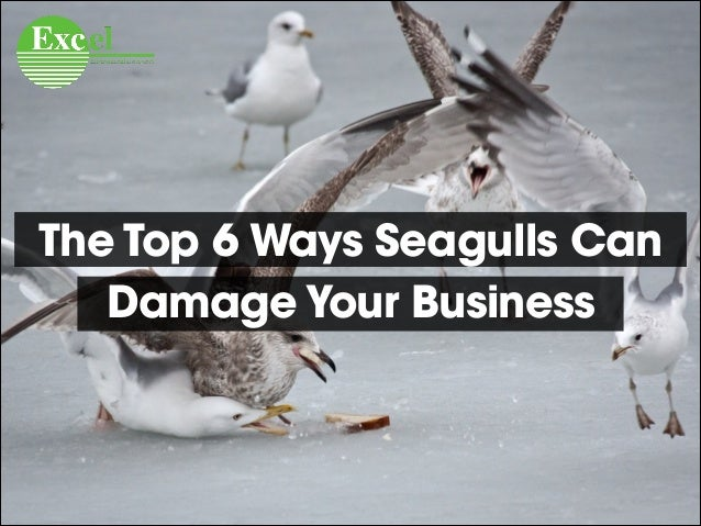 The Top 6 Ways Seagulls Can Damage Your Business