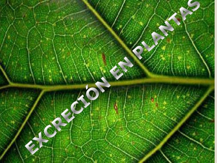    LAS PLANTAS NO CUENTAN CON UN    SISTEMA EXCRETOR COMPLEJO.