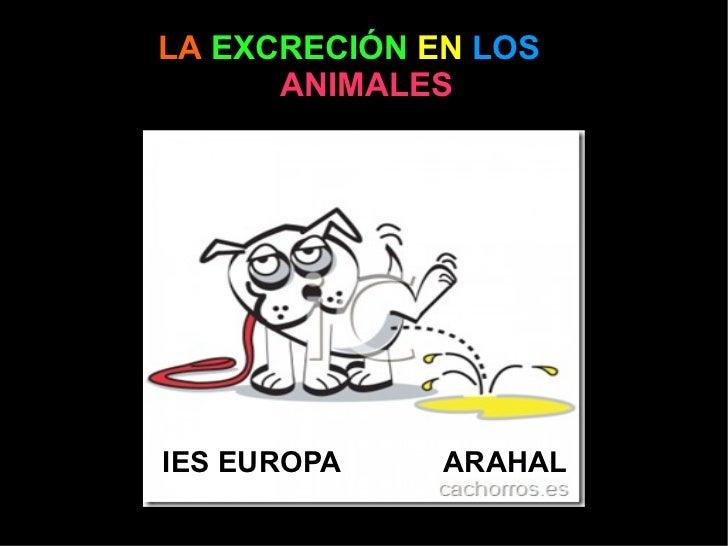 LA   EXCRECIÓN   EN   LOS   ANIMALES IES EUROPA ARAHAL