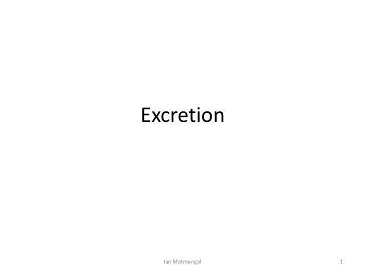 Excretion<br />1<br />Ian Matmungal<br />