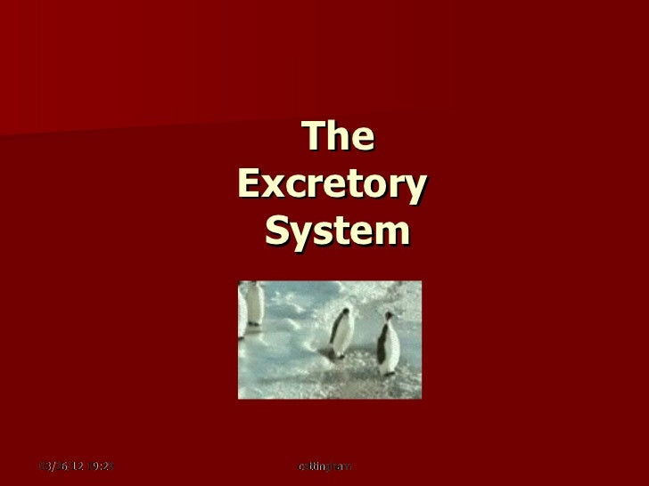 The                 Excretory                  System03/26/12 19:29     cottingham