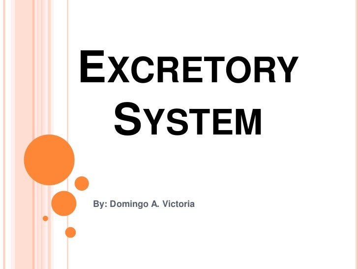 Excretory System<br />By: Domingo A. Victoria<br />