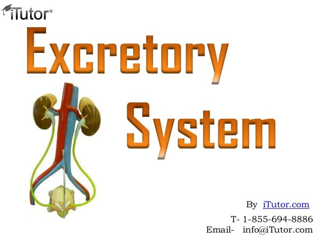 T- 1-855-694-8886Email- info@iTutor.comBy iTutor.com