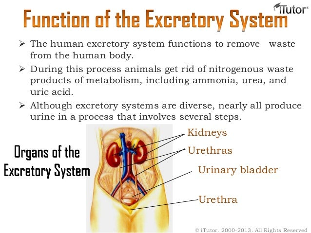 Dont Try Before You Read This Urinary System Functions
