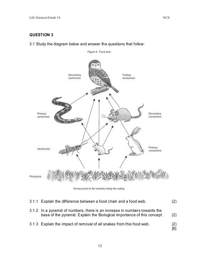Printables Food Web Worksheet High School food web worksheet high school pdf 1000 images about animal math exemplars tests practicals projects pdf