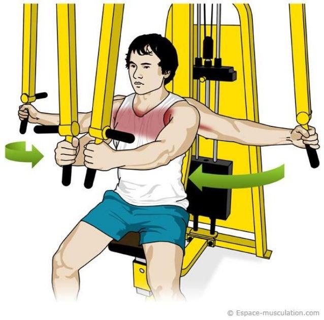 Exercices pectoraux