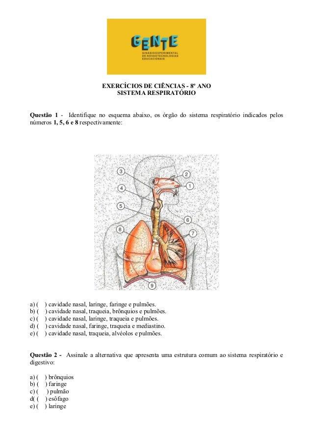 EXERCÍCIOS DE CIÊNCIAS - 8º ANO SISTEMA RESPIRATÓRIO Questão 1 - Identifique no esquema abaixo, os órgão do sistema respir...