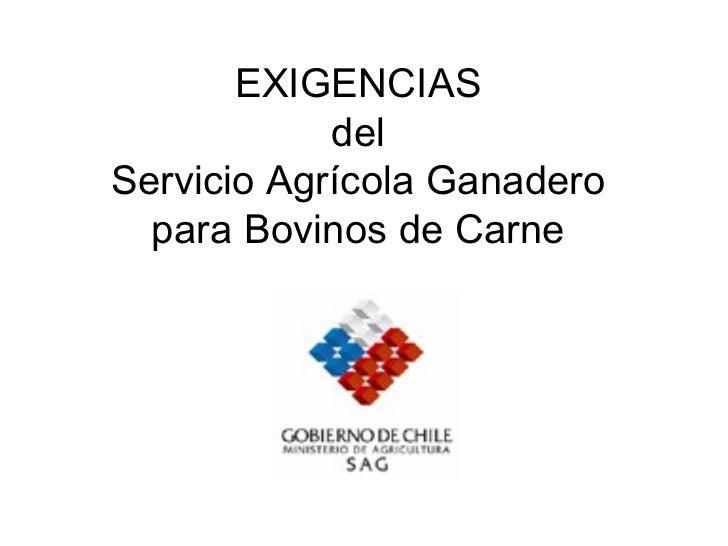 EXIGENCIAS del Servicio Agrícola Ganadero para Bovinos de Carne