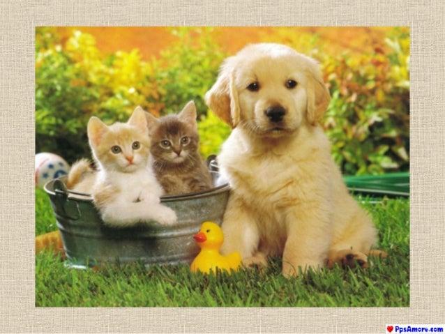 Cani e gatti cani e gatti for I cani youtube