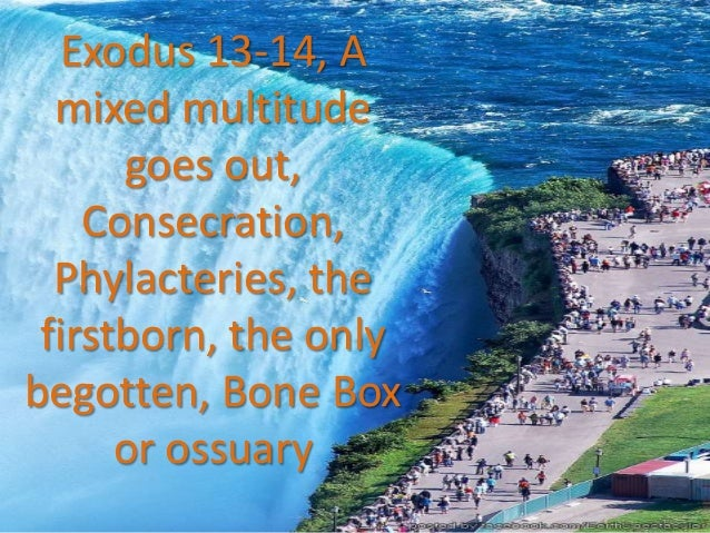 Exodus 13 14, a mixed multitude, consecrate, phylacteries, the firstborn, the only begotten, bone box or ossuary, ss