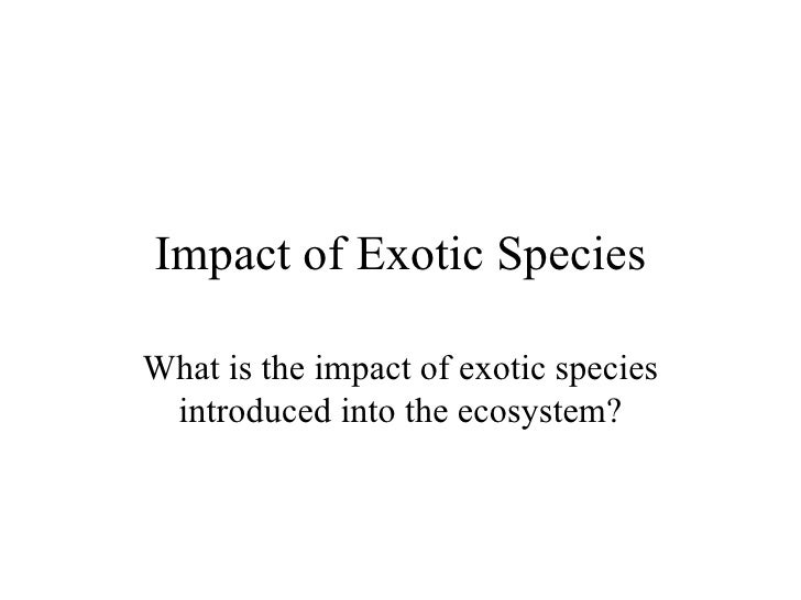 Impact of Exotic Species What is the impact of exotic species introduced into the ecosystem?