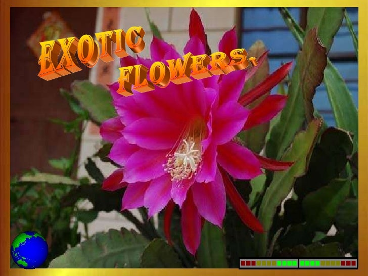 exotic FLOWERS.