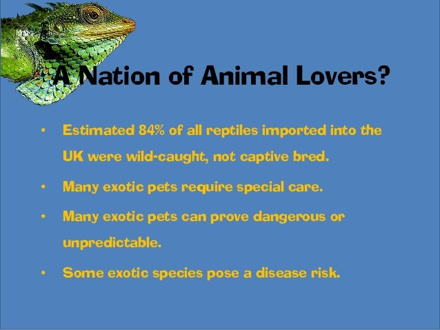 Exotic animals as pets statistics - photo#12