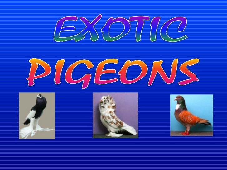 The National Pigeon Association (NPA) isthe largest national organization in the UnitedStates . Each year the NPA holds a ...